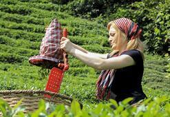 Çay üreticileri 3.40 TL fiyatı olumlu buldu