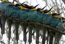 Karsta canlanan doğa kuşlarla şenlendi
