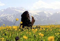 Yüksekovada dağda kar, ovada sarı çiçekler