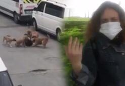 Sultangazide işine gitmek isteyen kadına sokakta köpekler saldırdı