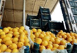 Bakan Pakdemirli müjdeyi verdi 10 bin ton limon ihracatına izin verildi