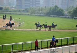 Milyon liralık atlar, yarışların başlamasına hazır