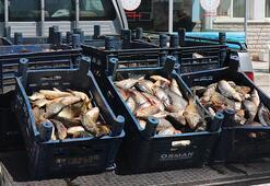 Elazığda kaçak avlanan 1 ton 400 kilo yavru sazan ele geçirildi