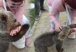 Emel Müftüoğlu ayı saldırısına uğradı