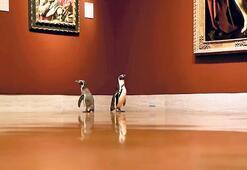 Penguenler müze gezdi