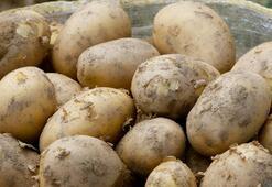 Patateste 50 bin tonluk dış satım izni üreticileri sevindirdi