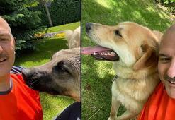Bakan Soylu sahiplendiği sokak köpeklerinin fotoğraflarını paylaştı