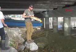 Sulama kanalından balık kurtarma operasyonu