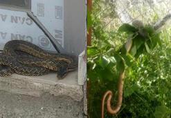Son dakika... Şehri yılanlar bastı Evlerin bahçelerine kadar giriyorlar...