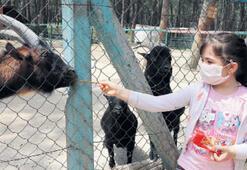 Çocukların hayvanat bahçesi mutluluğu