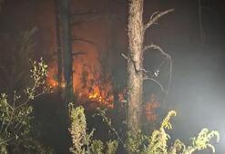 Son dakika | İstanbul Aydos Ormanında yangın: Ekipler olay yerinde