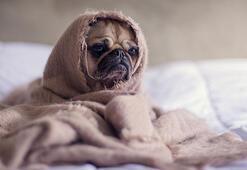Köpekler nasıl sakinleştirilmeli