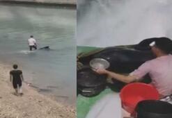 Sahile vuran 150 kiloluk balina özgürlüğüne kavuştu