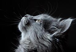 2020 Kedi İsimleri - Erkek Ve Dişi Kediler İçin En Güzel, Değişik Ve Sevimli Kedi İsimleri