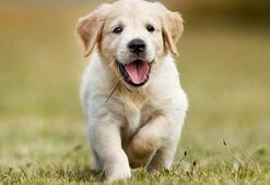 2020 Köpek İsimleri - Dişi Ve Erkek Köpekler İçin En Güzel Köpek İsimleri