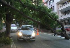 Ankarada fırtına yüzünden ağaç devrildi