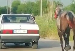 Atın, otomobille koşturulmasına tepki