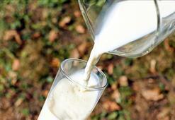 Süt sektöründe Çine ihracat hareketliliği