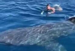 İspanya'da paralimpik yüzücü köpek balığıyla burun buruna geldi