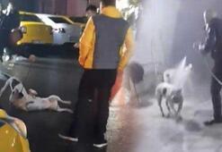 İstanbul'da pitbull saldırısı Tazyikli su sıkarak ayırdılar