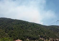 Son dakika I Antalyada orman yangını