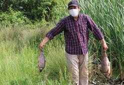 Göynükte baraj gölündeki toplu balık ölümlerine ilişkin inceleme