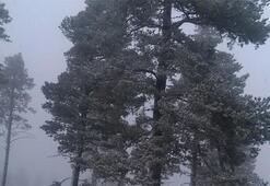 Rekor soğuk Hava derecesi şoke etti