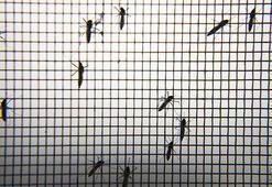 Corona virüs sivrisineklerden bulaşır mı Flaş açıklama