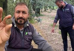 Zeytin ağaçlarını ilaçlarken 2200 yıllık sikke buldu