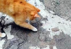 Kedi yakaladığı kertenkeleyle böyle oynadı