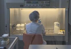 Türkiyenin yerli ve milli patates tohumları laboratuvarda üretiliyor