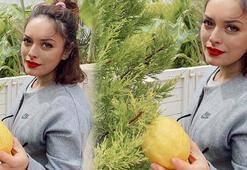 Çam ağacı bile limon verdi