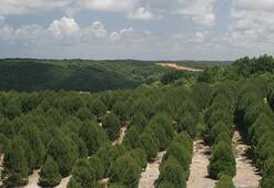 İstanbulun yüzde 44,4ü orman