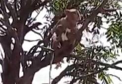 Ülkede panik Maymunlar pandemi hastanesinden kan örneklerini çaldı