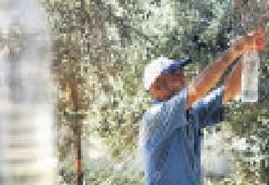 Tire'de zeytin sineğine karşı mücadele imzası