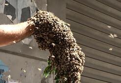 Son dakika... Sultangazide panik Binlerce arıyı kolunda topladı