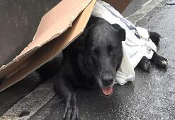 Bayrampaşada yaralı köpeği kurtarma seferberliği