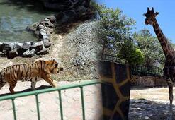 Gaziantep Hayvanat Bahçesi ziyaretçilere açıldı
