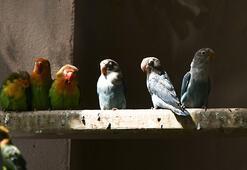 Sınırda yakalanan 200 cennet papağanı Gaziantepe getirildi