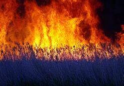 Birçok kuş türüne ev sahipliği yapıyordu... Alev alev yandı