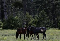 Korkunç iddia Atları avlayıp sucuk yapıldığını tahmin ediyoruz