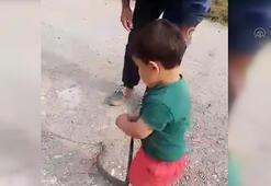 Son dakika haberleri: Düzcede akılalmaz olay 3 yaşındaki çocuğu yılan ile oynattı