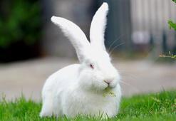 Pandemi sürecinde tavşan satışları arttı
