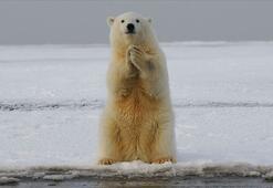 1 milyona yakın hayvan ve bitki türü yok olma riski altında