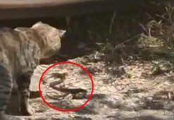 Son dakika Kedinin patisiyle oynadığı yılan otomobile girdi çıkarılamadı