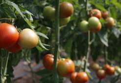 Türkiyenin yaş meyve ve sebze ihracatında artış