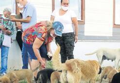Hayvansever kadına komşulardan tehdit