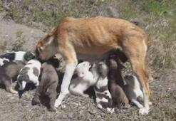 Köpek ve 14 yavrusuna hayvanseverler sahip çıktı