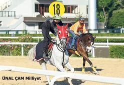 Salgın atları da yavaşlatabilir