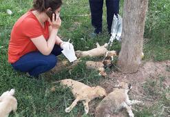Tokat'ta yürek burkan görüntü 5 yavru köpek ölmek üzereyken bulundu